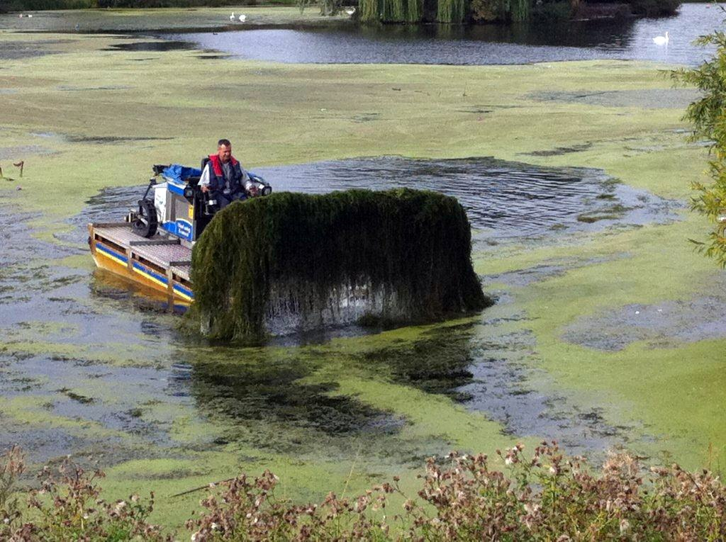 Canadian Pondweed – The True Cost