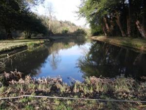 Lake and pond maintenance