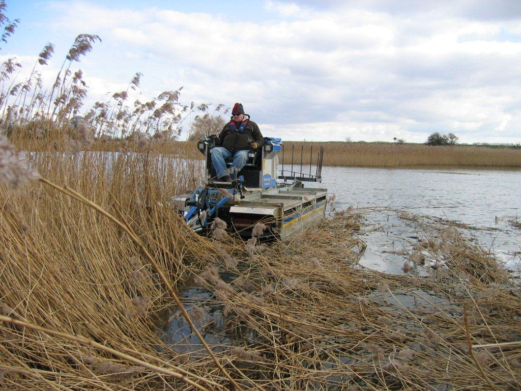 Reed bed manage, reed cutting, nature reserve maintenance